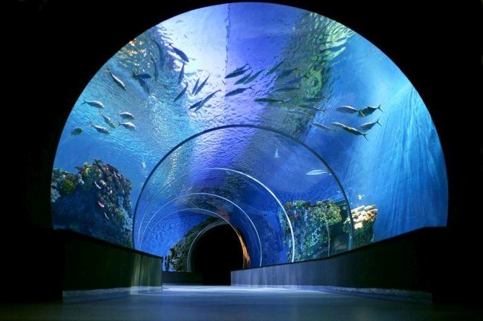 Уникальный океанариум «Голубая планета» в Дании  дания, океанариум