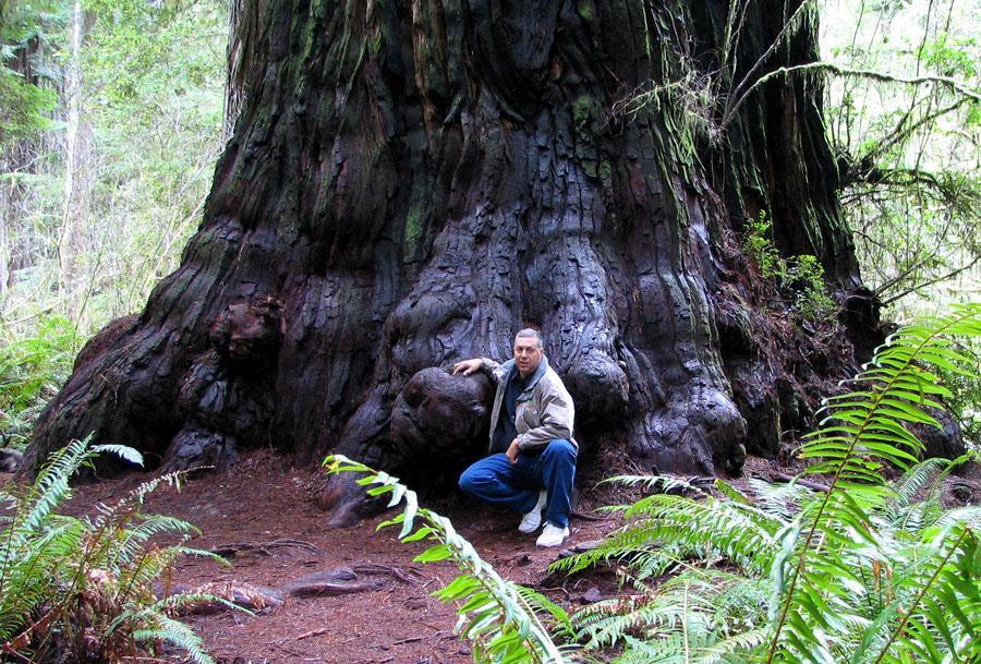 486 10 высочайших деревьев планеты