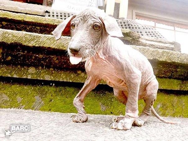 Спасение и невероятное преображение пса Фрэнки, найденного в канаве.
