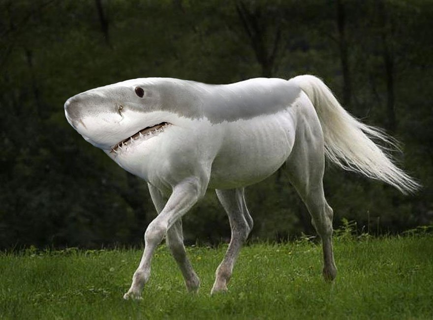 Акулошадь