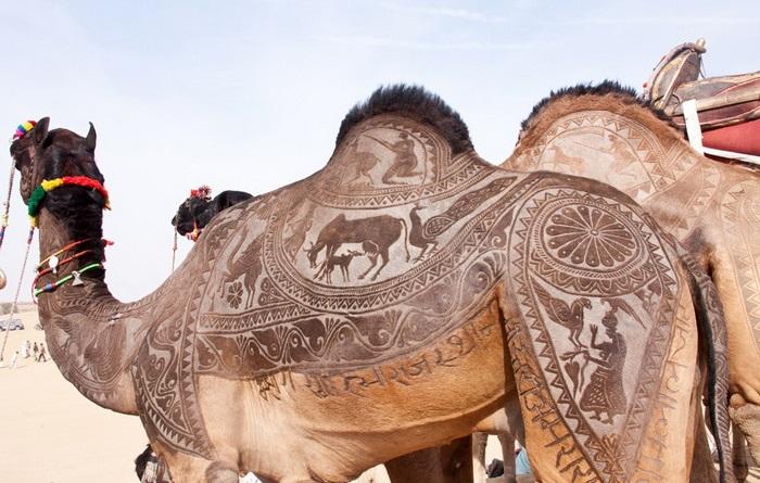 фестиваль верблюдов