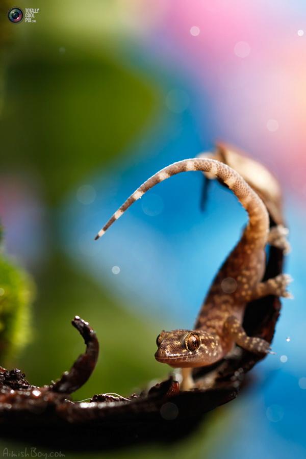 aimishboy 028 Удивительная макрофотография: неожиданно гламурные насекомые и многое другое