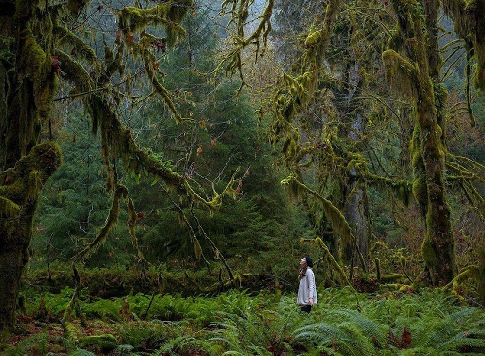 24. Лес в Национальном парке Олимпик, США. люди, мир, удивительные фотографии