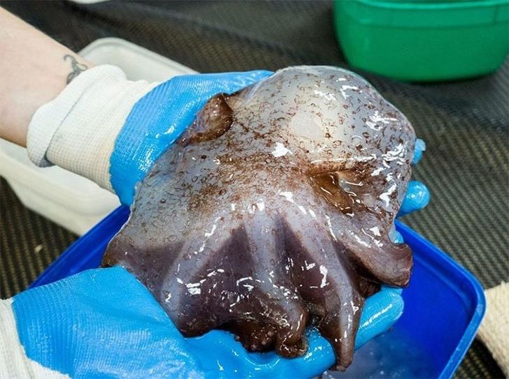 10 жутких существ, обитающих у берегов Австралии