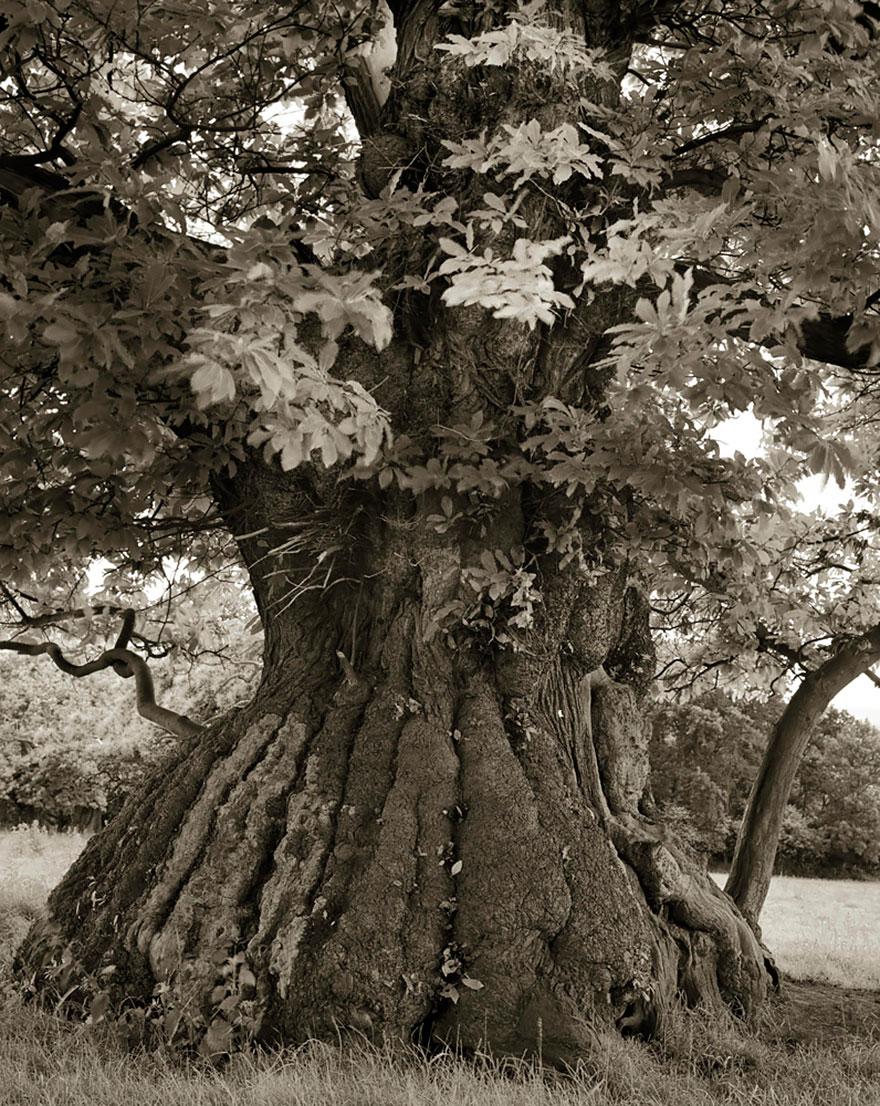 Деревья древние как мир в фотографиях из 14-летнего путешествия-12