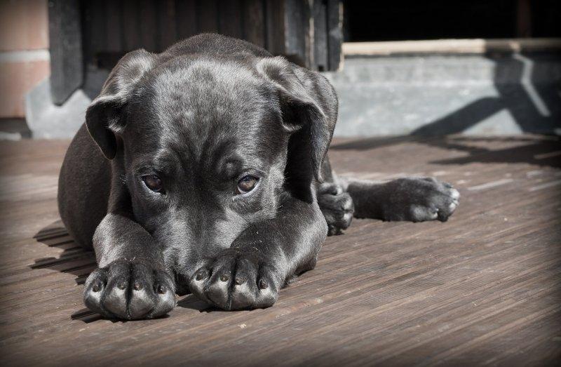 Британские ученые опровергли миф о том, что собаки заметно умнее других животных