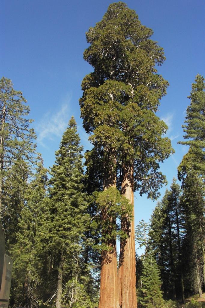 848 10 высочайших деревьев планеты