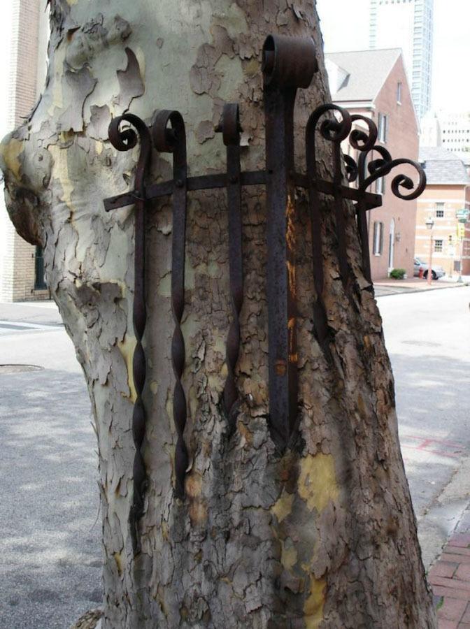 Деревья едят вещи