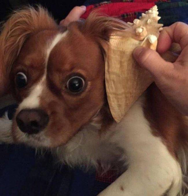 Самые прикольные фотографии собак за 2015 год (32 фото)