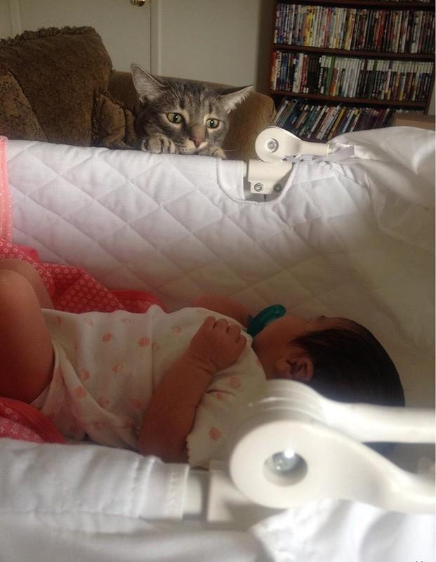 """""""Друг только что забрал жену с новорожденным ребенком из роддома, а кот уже понял, что ему будет не сладко"""""""
