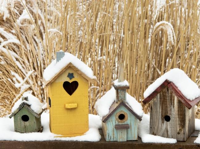 5 условий красоты зимнего сада