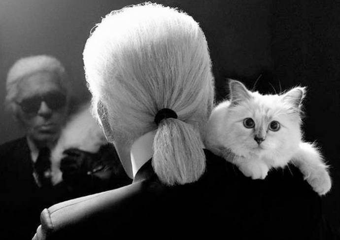 Знаменитые коты-миллионеры