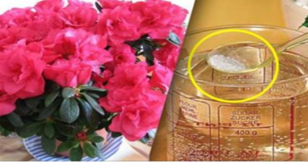 Секрет флористов: 1 средство для быстрого роста комнатных растений!