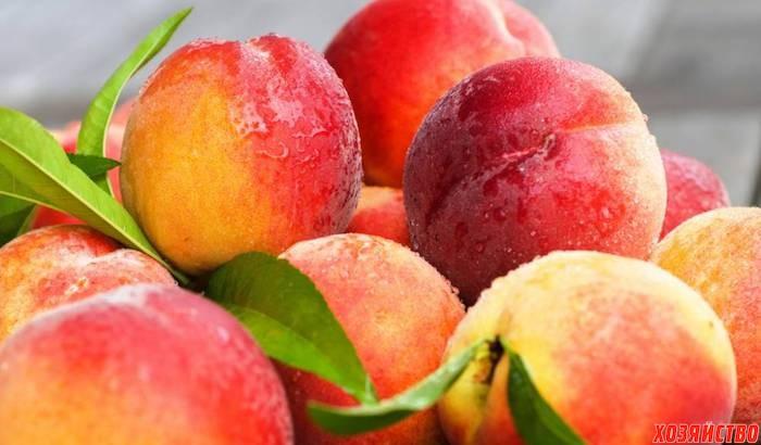 Выращивание персика в северн…