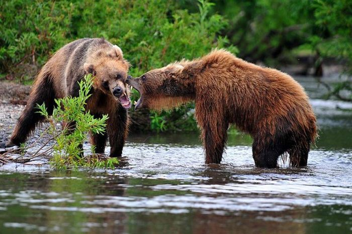 Прекрасные снимки дикой природы от Сергея Горшкова дикая природа, красота, фото