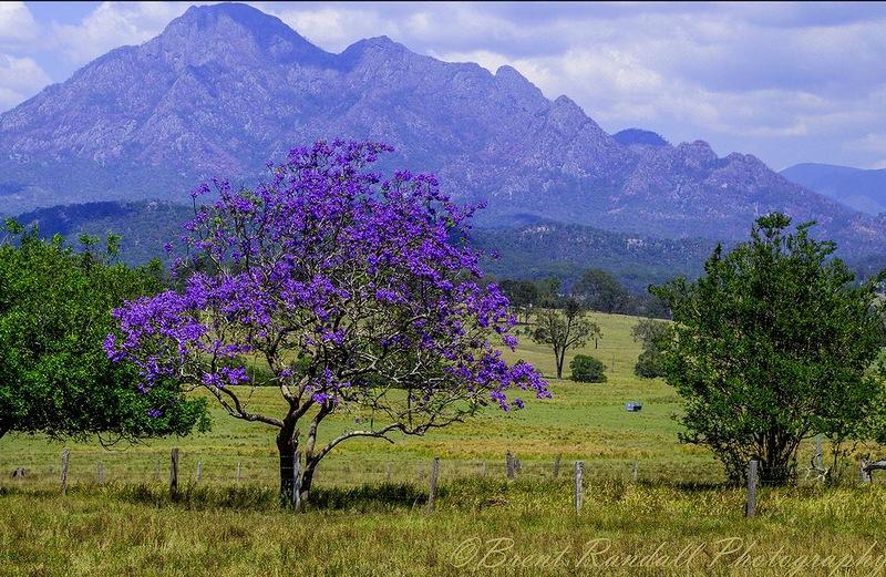 фото жаккардовое дерево