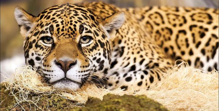 Как в разных странах мира пытаются восстанавливать популяции диких животных