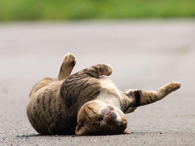 Кот ж..ой вперед бегает(с)