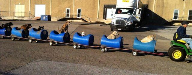 Техасский пенсионер построил паровозик для уличных собак. И катает их