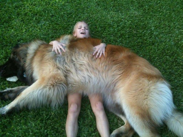 3. Леонбергер Порода, собака