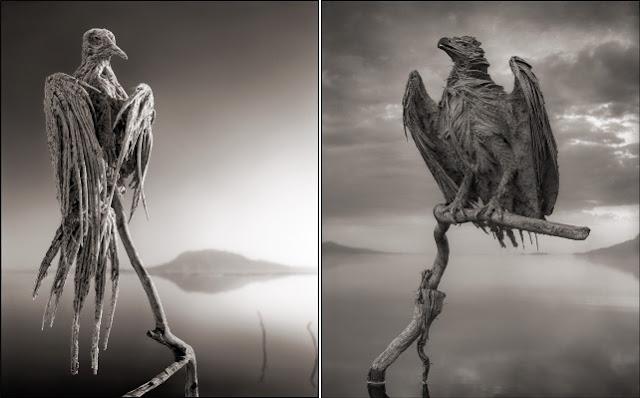 Смертельное озеро в Танзании превращает животных в статуи