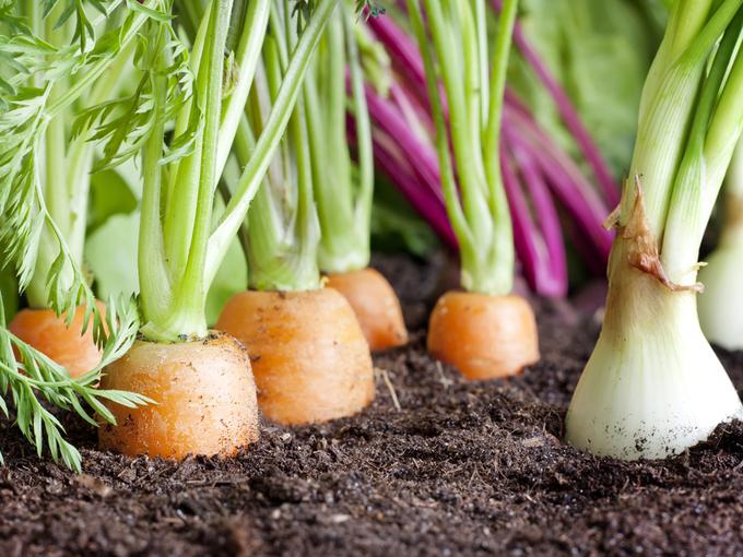 Готовим почву к посадке овощей: правила и советы