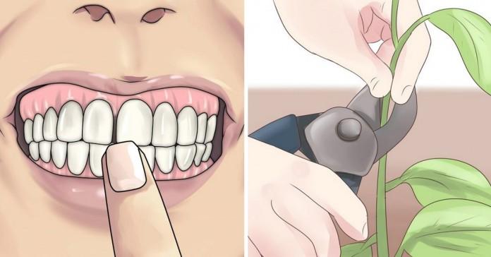 Забудь о проблемах с зубами! Эти 8 растений сделают твою улыбку неотразимой