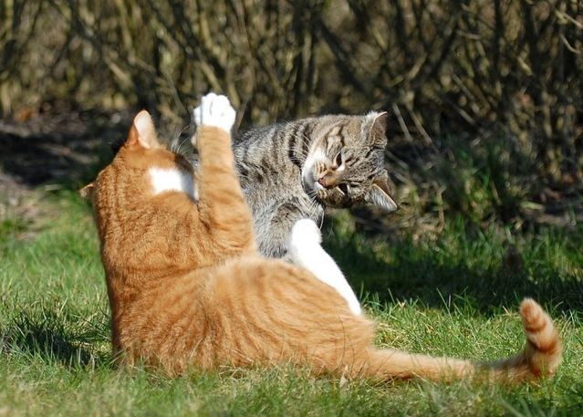 cat_flying_fight_03