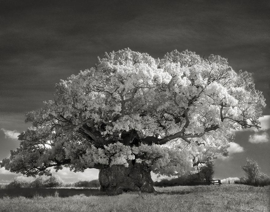 Деревья древние как мир в фотографиях из 14-летнего путешествия-2
