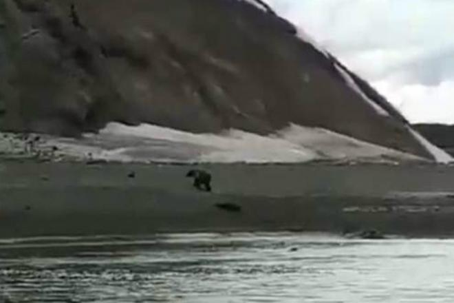 Встречу голодного медведя и рыбака случайно сняли на видео