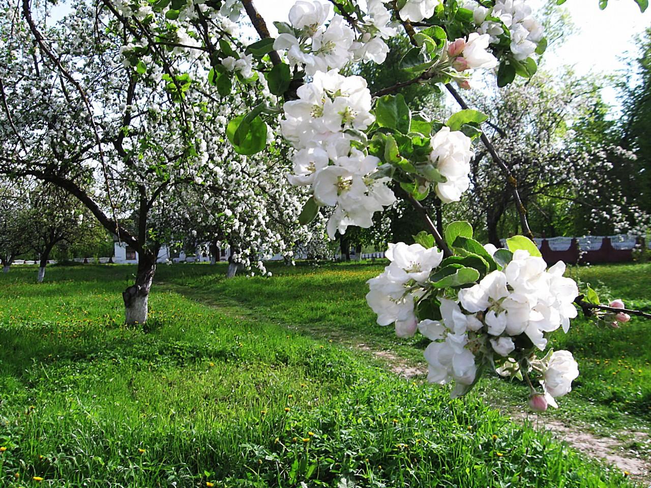 """""""Весны цветенье..."""""""