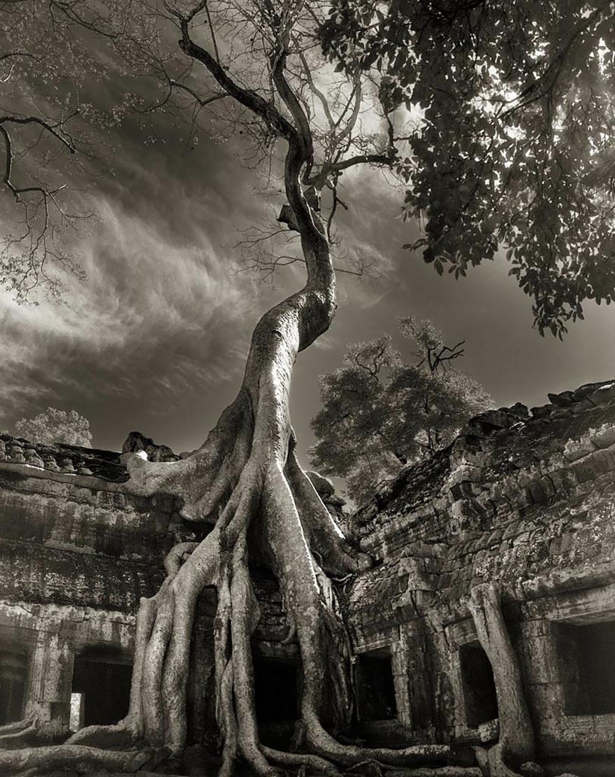 Деревья древние как мир в фотографиях из 14-летнего путешествия-17