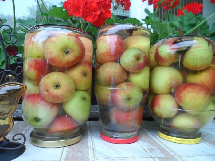 Моченые яблока с фото
