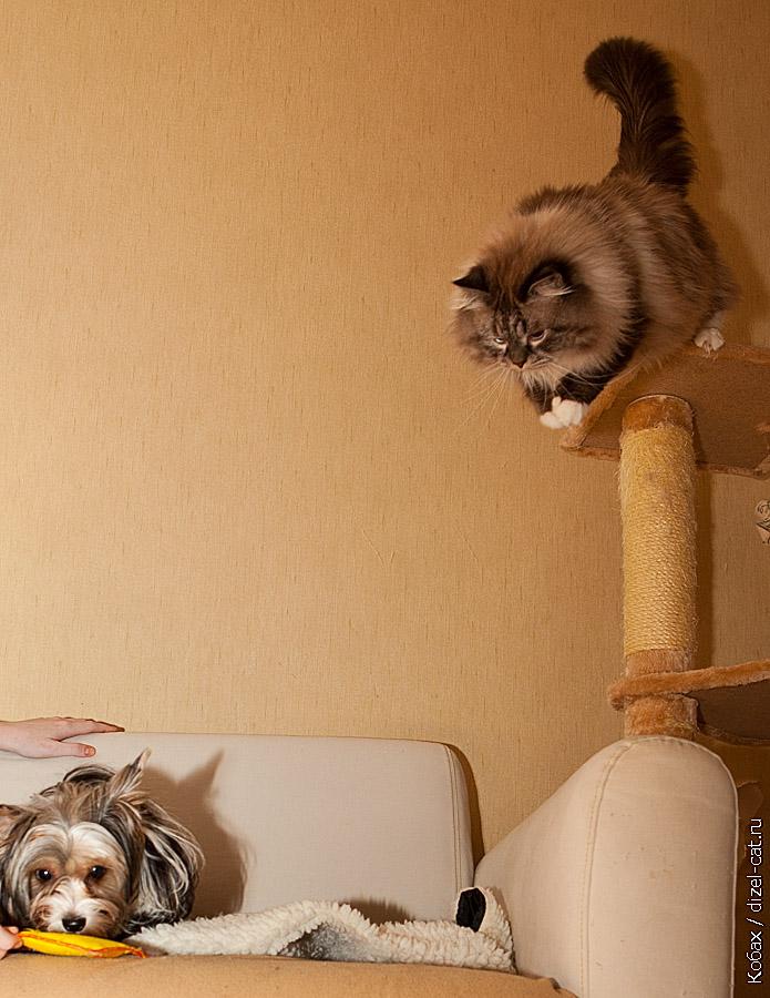 История кота Севы