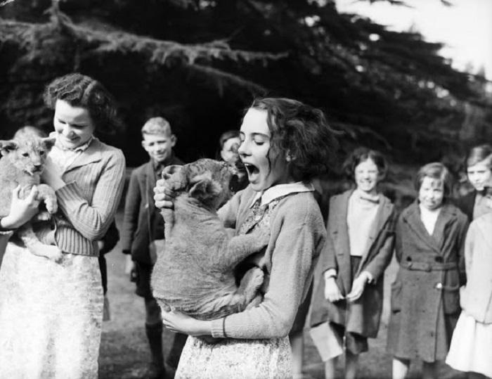 Сестры Моттерсхед (Англия), взяли львят на воспитание, потому что зоопарк не мог позаботиться о них во время войны.