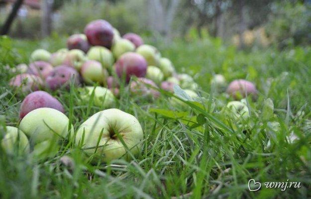 Секреты народной медицины: яблочный уксус