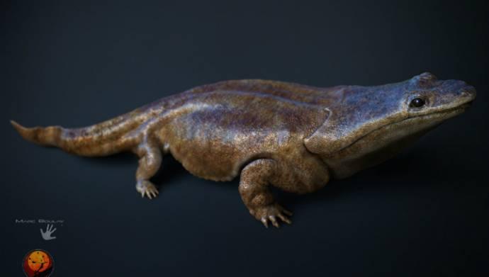 В китайском парке случайно нашли редчайшую исполинскую саламандру