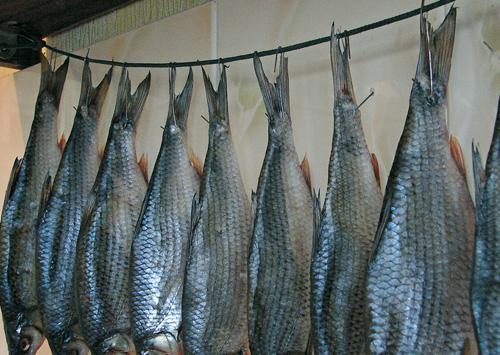 Вялить рыбу в домашних условиях в рассоле