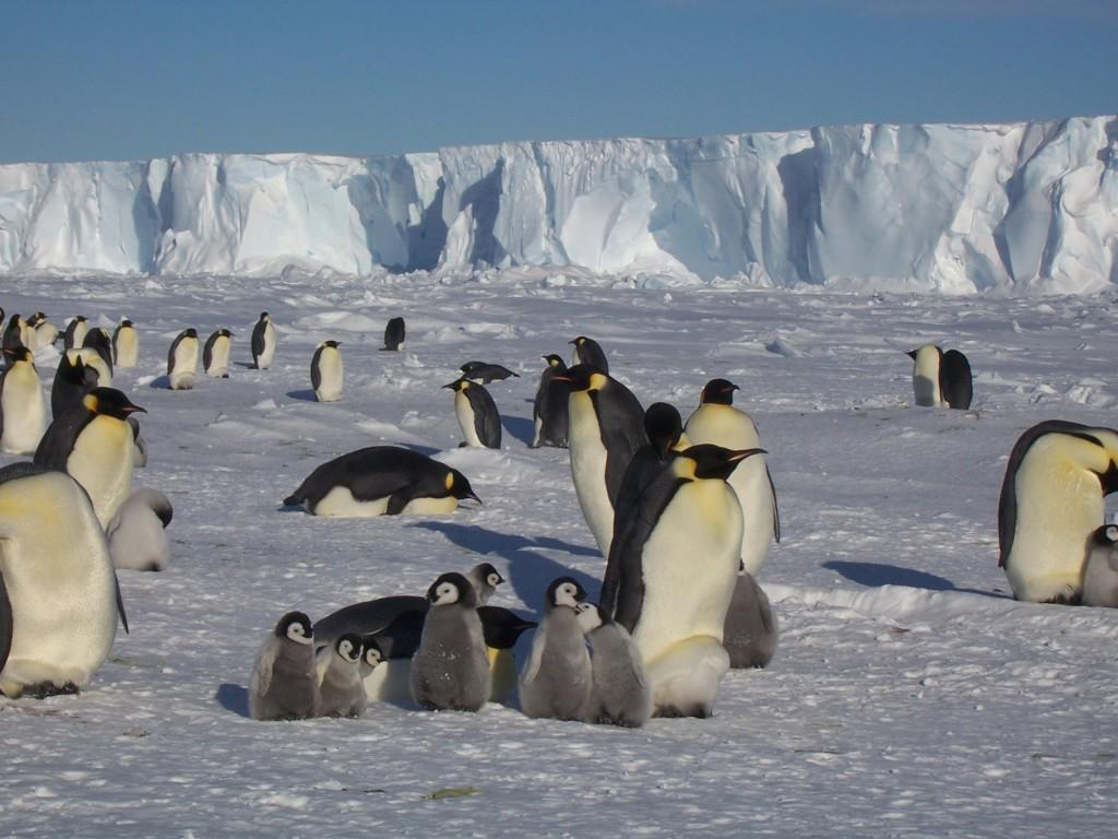 Ленин в антарктиде- самый редкопосещаемый памятник в мире