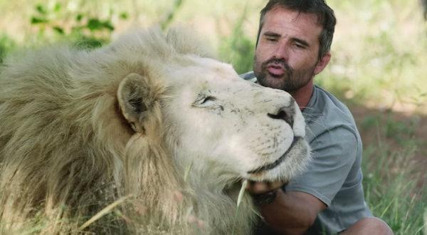 Спасение льва в рекламе стоматологии