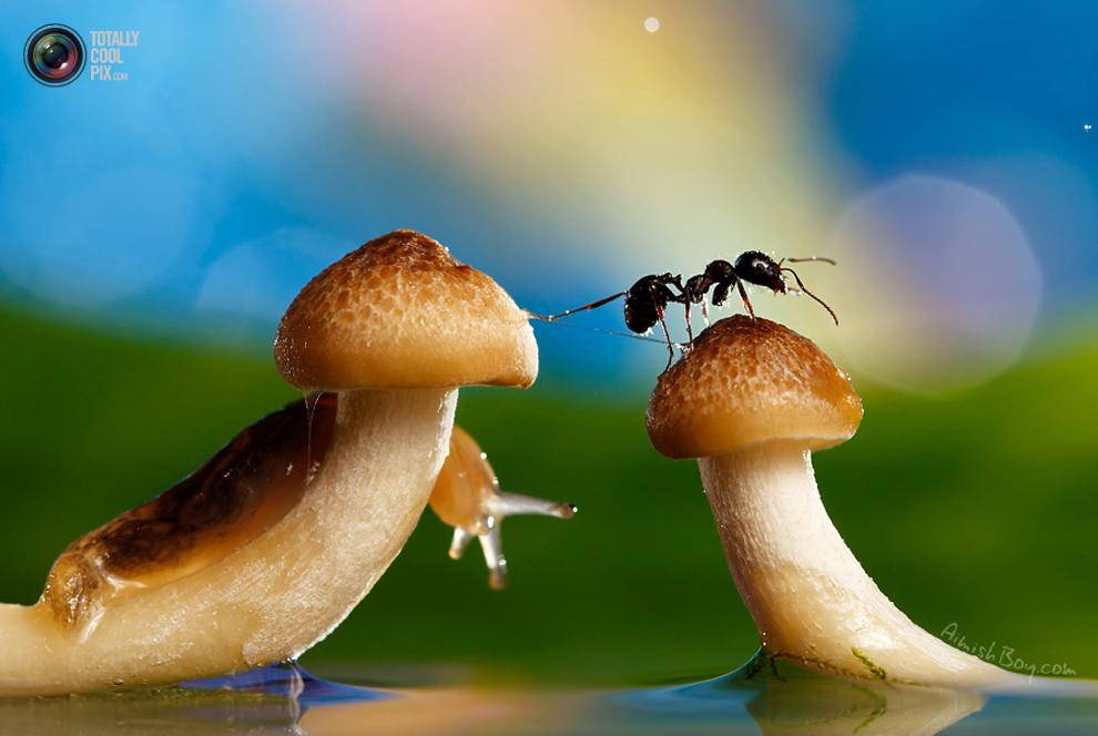 aimishboy 036 Удивительная макрофотография: неожиданно гламурные насекомые и многое другое