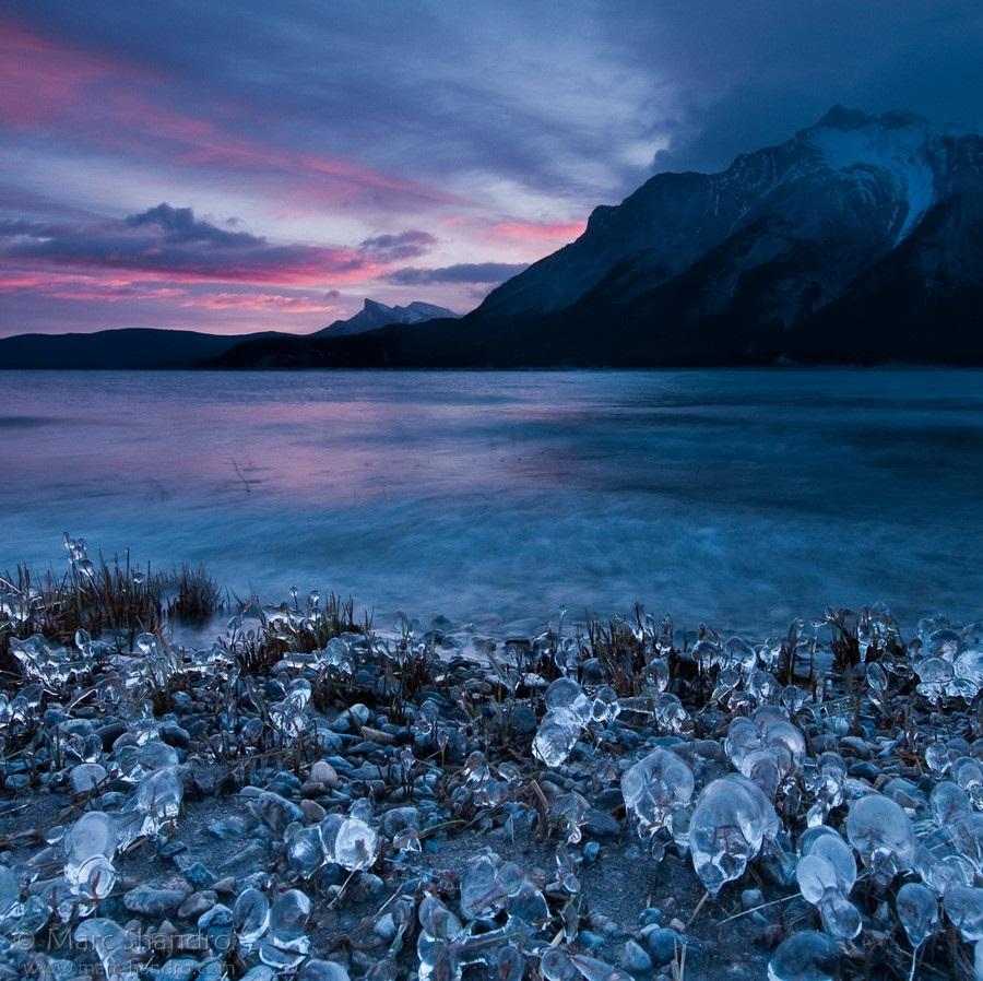 Ice Flowers of Abraham Lake