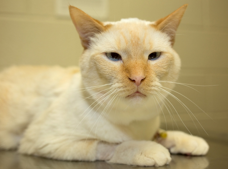 cat Arthur