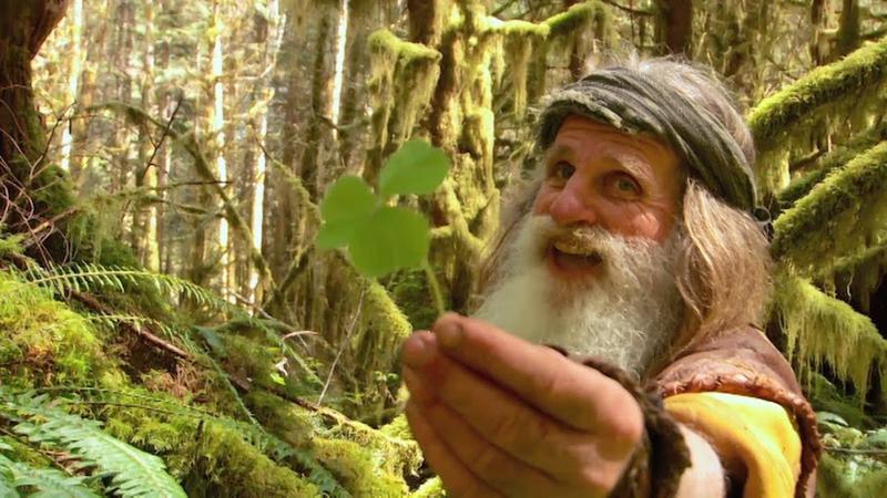 Пень от дерева заменил этому мужчине дом, а шишки - зубную щетку. Легендарный дикий человек!