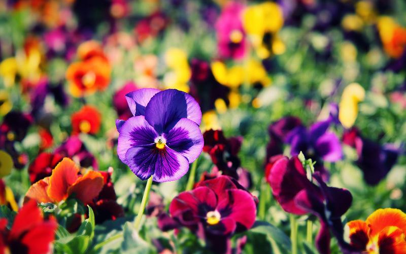 цветы фото красивые картинки на рабочий стол № 376877  скачать