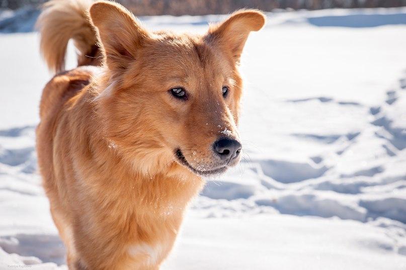 Удивительная история пса по имени Листопад