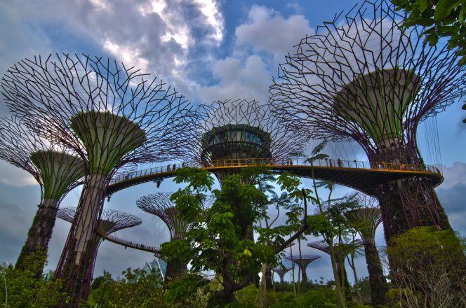 """Огромные искусственные деревья в саду """"Gardens by the Bay"""", Сингапур"""