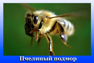 269b36e876e375e05083f78293992209_M (400x267, 52Kb)