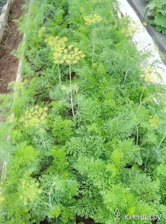 Семена с огорода