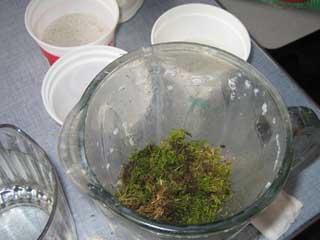 Moss1_394